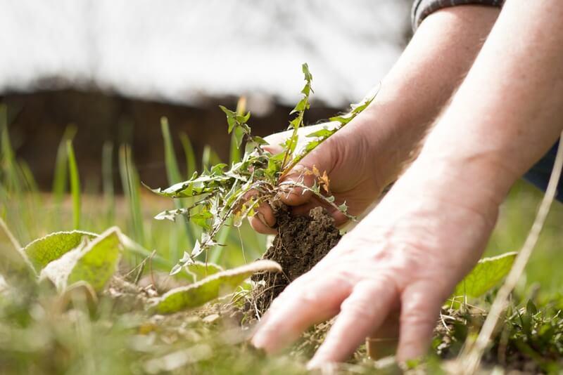 草むしりのやり方